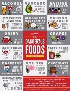 dangerousfoodsfordogs