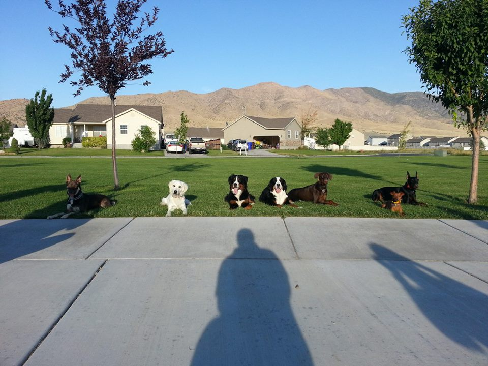 A Group E-touch Class practicing their off leash down/stay with distance and distractions
