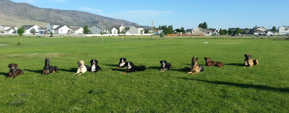 Group E-touch class working on their off leash down/stay with distance and distractions