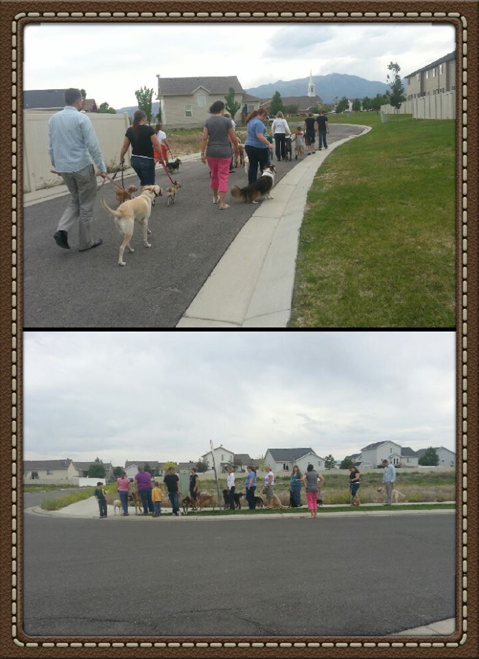 Group obedience class doing a pack walk to work on leash work and manners on walks
