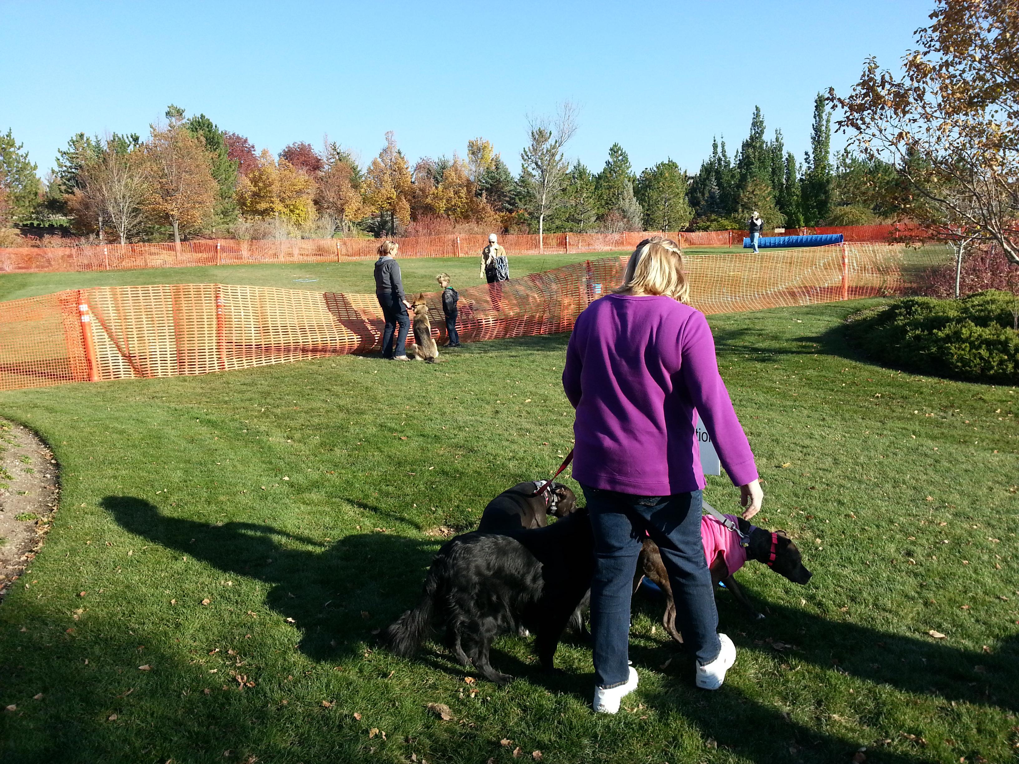 Dog Training Classes In Utah