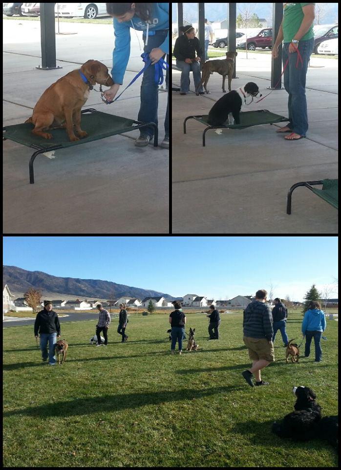 Utah Dog Trainer