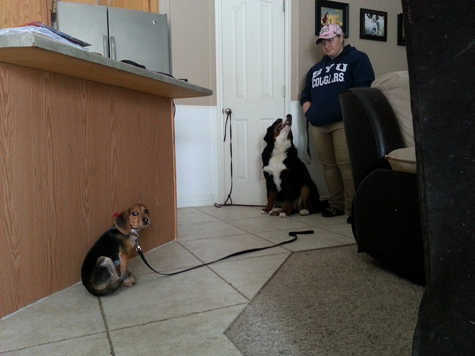 dog training utah
