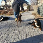 utah dog training