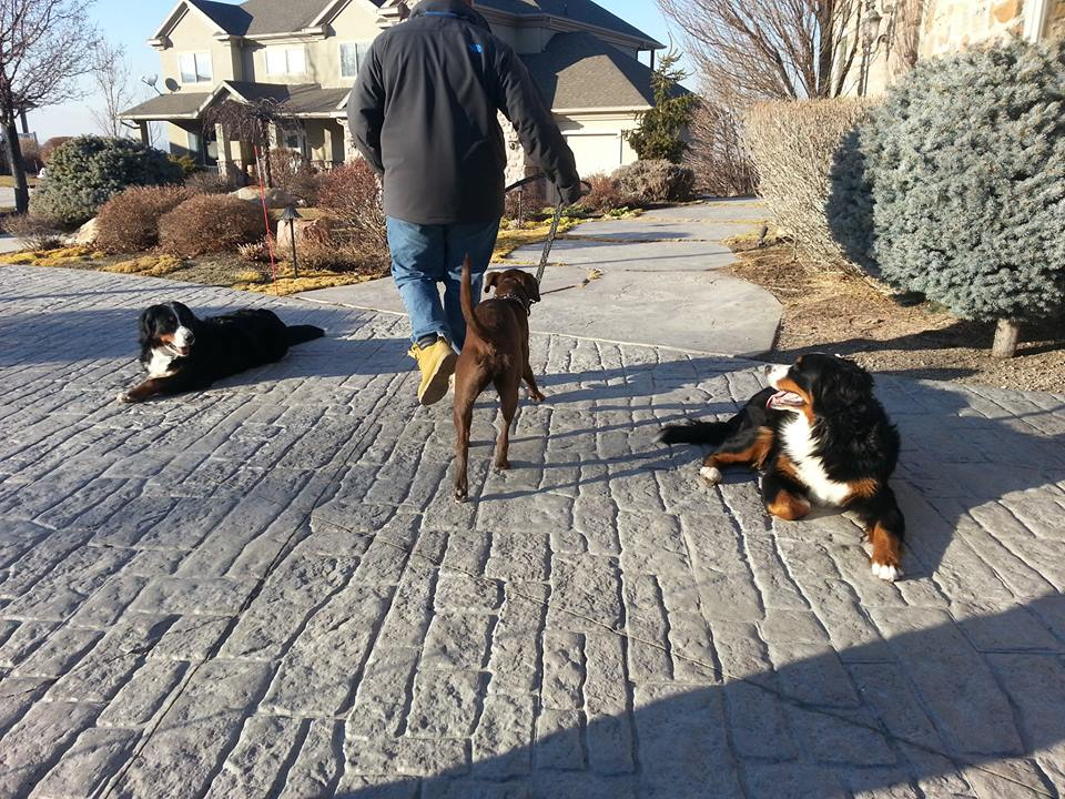 utah dog training