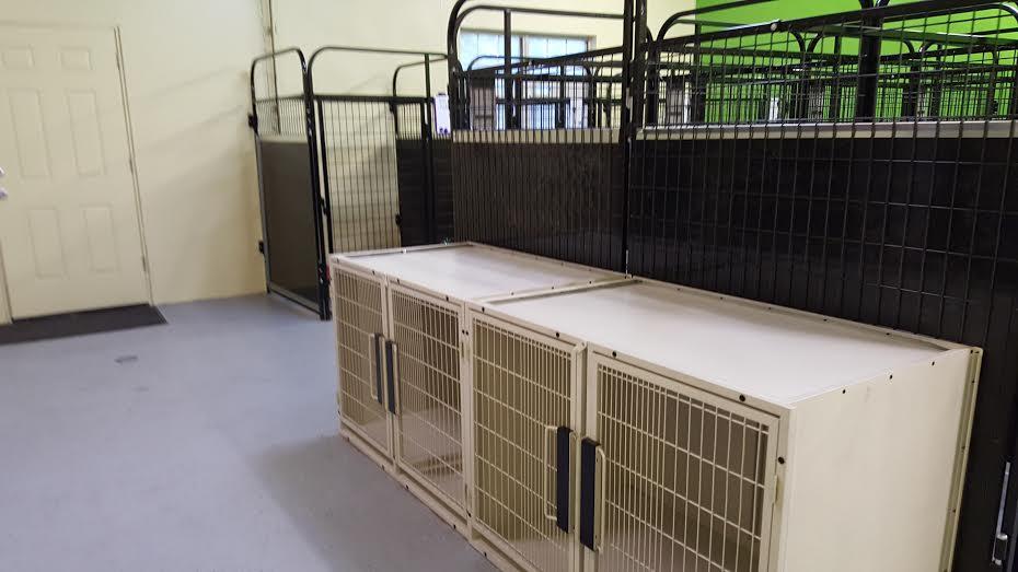 Large Breed Room