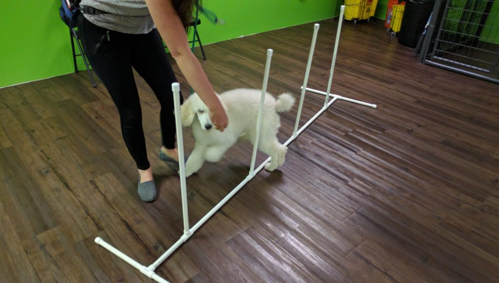 puppyclass